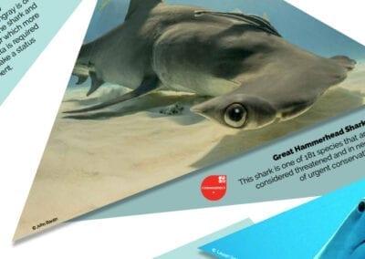 Shark Trust exhibition graphics