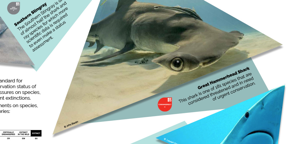Shark Trust exhibition graphics