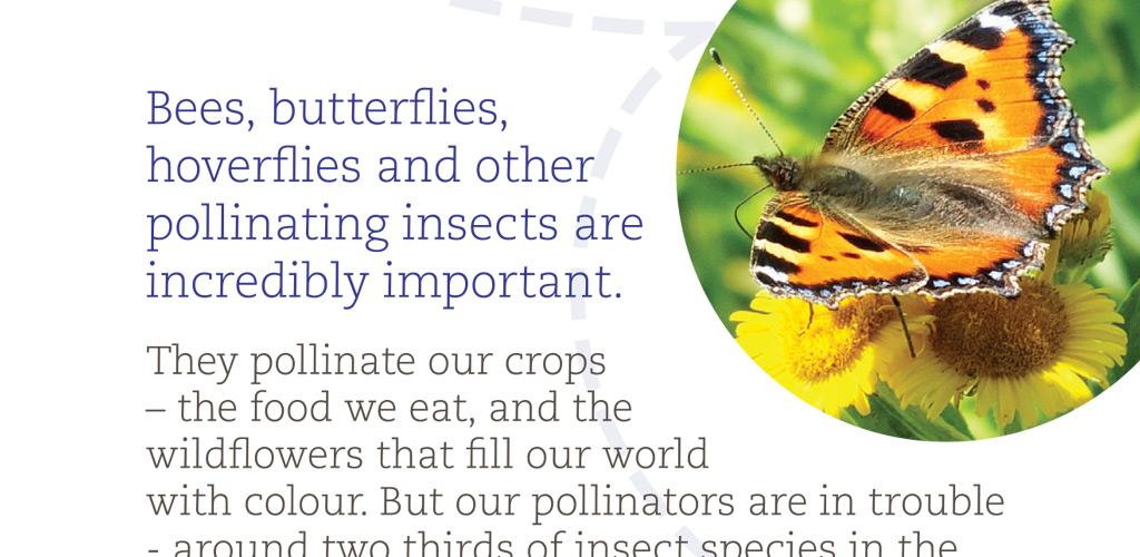 Buglife postcard design