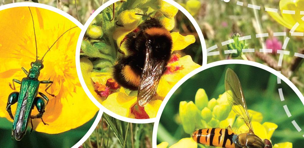 Buglife post card design